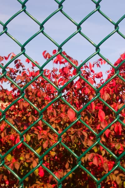 close up of a chain link fence