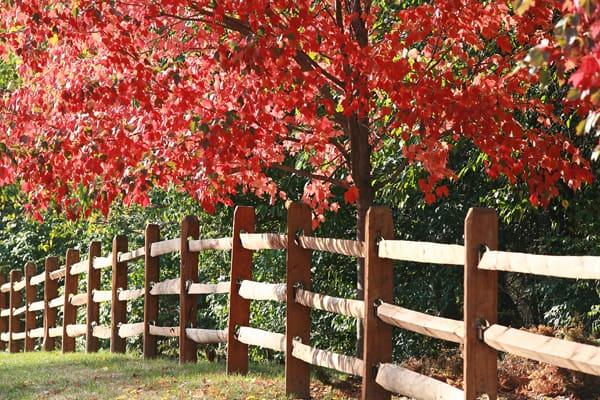 wood fence - no slats