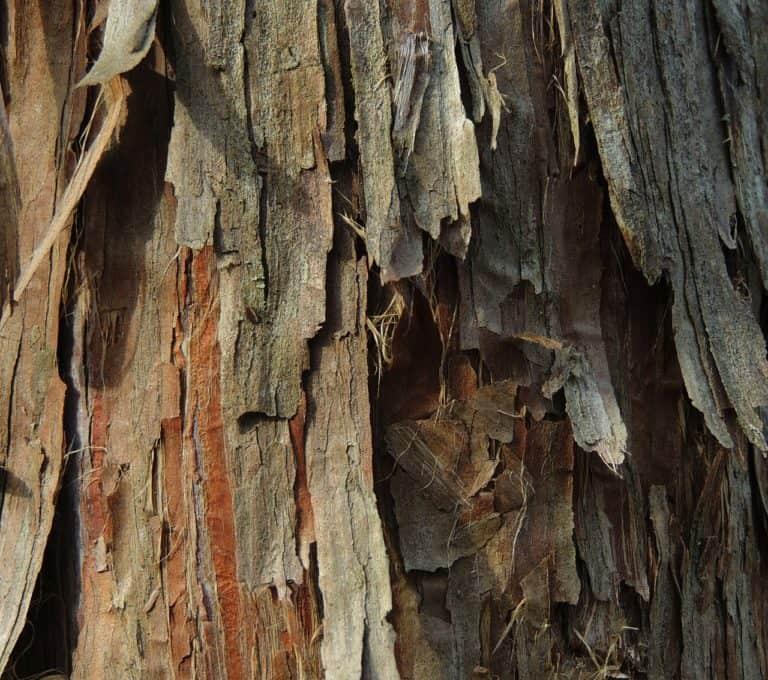 Cedar Fencing – The Superior Wood Choice For Fences